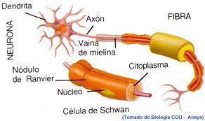 Programa de Neuroterapia.